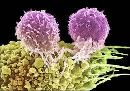 лимфоциты атакуют раковую клетку